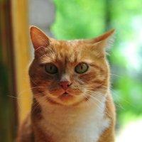 Мой кот Кокос. :: Виталий Виницкий