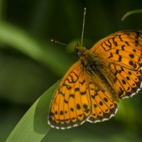 Охота на бабочек :: Татьяна Степанова