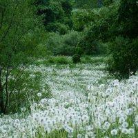 белая река :: татьяна горбунова