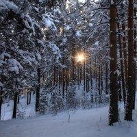 Зима :: Анна Анхен