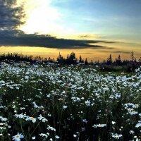 Пора цветения и гроз... :: Владимир