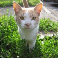 Бездомный котик :: csu68 Александрова