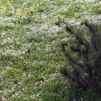 В весеннем лесу :: Nikolay Monahov