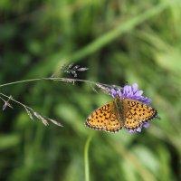 Бабочка :: Людмила Быстрова