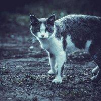 Кошечка :: Леонид Баландин