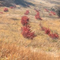 Осенние краски на склонах г. Бештау :: Vladimir 070549
