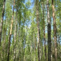 Дорога в весеннем лесу :: Вита Чернышева (CheVita)