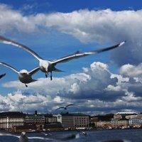 Чайки в полёте. :: Александр Лейкум