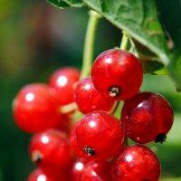 лето вкусное :: Валерия Шамсутдинова