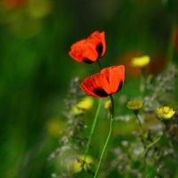 Букет, подаренный природой) :: Jane Eyre *