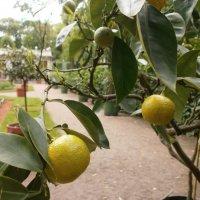 Плоды в Летнем саду. :: Валентина Жукова