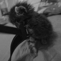 котька :: Танюшка Бодян