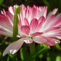 Цветок :: Мила C