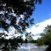 Живописное болотце :: Варвара Шонгина