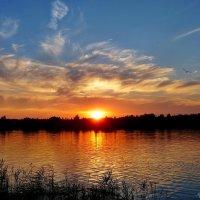 И чайка нежно пролетала, закатом наслаждаясь тем... :: Виктор ☼TYGRYS☼