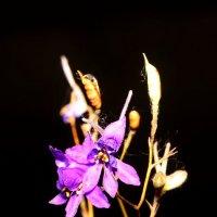 степной цветок :: Андрей Волгоградский