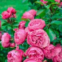 Цветы :: Александра К