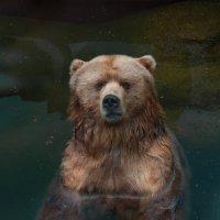 Медвежонок :: Gera Evtukhova