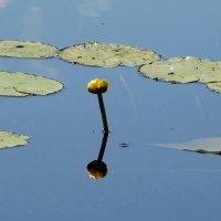 Кувшинка и озеро :: Владимир Гилясев