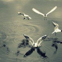 Танцы на воде :: Елена Перевозникова