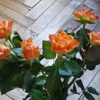 Розы-подарок :: Татьяна Юрасова