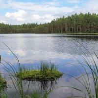 Лесное озеро :: Лариса Кайченкова