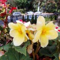 Цветы у храма!... :: Елена Бударевская