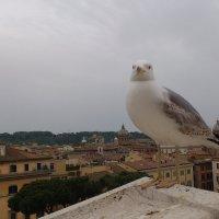 Позирующая чайка :: Ольга Богачёва