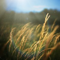 Запах травы. :: Евгений Корсун