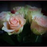 Розы :: mila