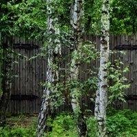 Ворота в сказку :: Сергей S.Tulpan