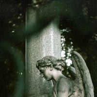 Дышать свежим ветром с преданными ангелами.. :: Larisa