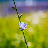 Цветы :: Екатерина Буслаева Буслаева