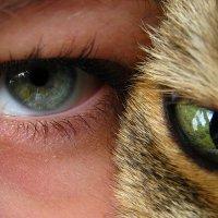 Реинкарнация...(наверно, когда я стану кошкой...) :: Александр С.
