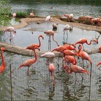 Розовый фламинго :: Liliya Kharlamova