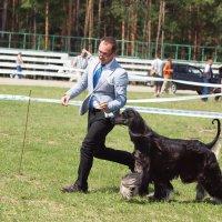 Бегом к Победе ! :: Андрей Зайцев