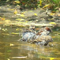 bathing :: Ирина К