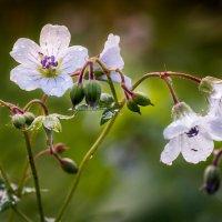 Воздушные цветочки :: Денис Антонов