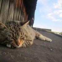 Я лягу здесь! :: Катя Бокова