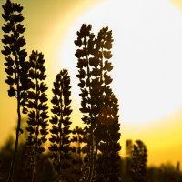 ... счастлив цветок, расцветший там, где посадил его Господь :: Екатерина Пономарева