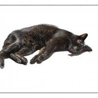 Лис спит! :: алекс дичанский
