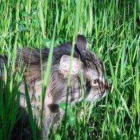 В травяных джунглях!!! :: Наталья Пендюк Пендюк