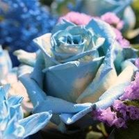 Фестиваль цветов в Москвве :: Ксения