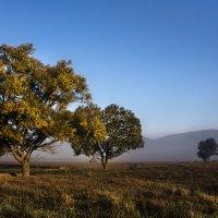 Три дерева. :: Юрий Кущ
