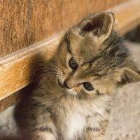 молочка не найдется? :: Satenik Smbatyan