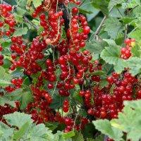 Мои 6 соток (Хороший урожай) :: Viacheslav
