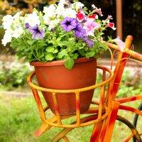 Цветы... :: Дмитрий Арсеньев