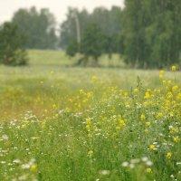 Летний дождь :: Михаил Фролов