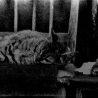 ...кошка... :: Влада Ветрова