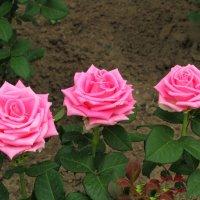 Тройная красота :: Marina Timoveewa
